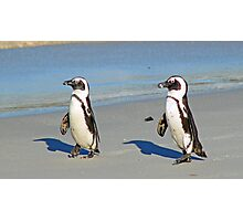 The march of the penguins! Photographic Print