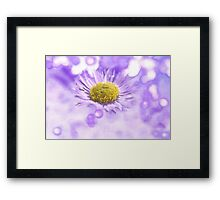 Wild Daisy in Lavender Light Framed Print