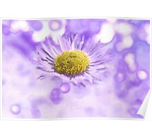 Wild Daisy in Lavender Light Poster