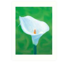 Naturally Perfect White Calla Art Print