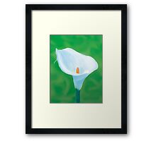 Naturally Perfect White Calla Framed Print