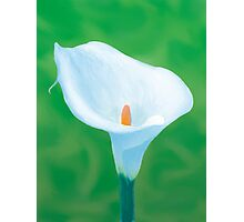 Naturally Perfect White Calla Photographic Print