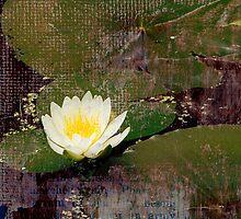 Lotus by Heather Reid-Barratt