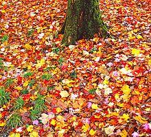 FALLEN LEAVES,TREE by Chuck Wickham