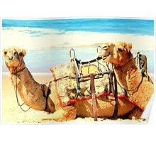 Laughing Camels Poster