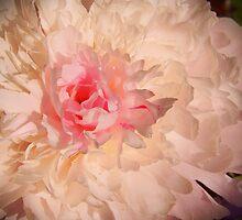Flower feed the Soul by Sunil Bhardwaj