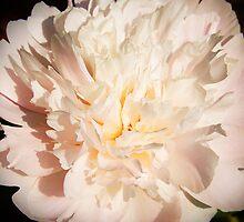 Perfumes are the feelings of flowers. by Sunil Bhardwaj