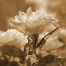 Sunshine, Roses and Morning Happiness (in Sepia) by Lozzar Flowers & Art
