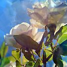 Sunshine, Roses and Morning Happiness (Portrait) by Lozzar Flowers & Art