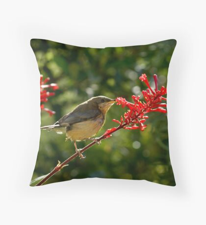 Eastern Spine-bill chick feeding Throw Pillow