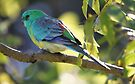 Pretty Birdie by yolanda