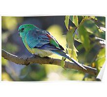 Pretty Birdie Poster