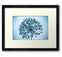 Blu Ali Framed Print