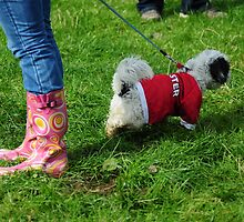 Ballyvaughan Races 2010 - Wellies and Dog by Karin  Funke