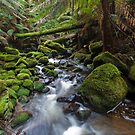Otways Rainforest II by Paul Pichugin