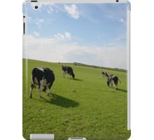 Cows grazing in the spring iPad Case/Skin