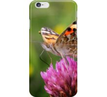 A Sweet Taste - Painted Lady - Vanessa cardui iPhone Case/Skin