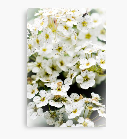 Wedding White Canvas Print