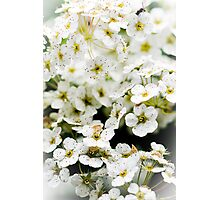 Wedding White Photographic Print