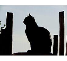 Johnny Cash Cat Photographic Print
