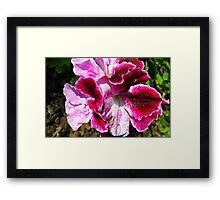 Multi-Colored Beauty Framed Print