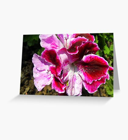 Multi-Colored Beauty Greeting Card