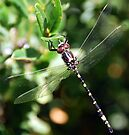 Dragonfly by Adam Le Good