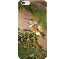 Baby Hummingbird on Hummingbird Nest iPhone Case/Skin