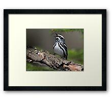 Black And White On Green / Black And White Warbler Framed Print