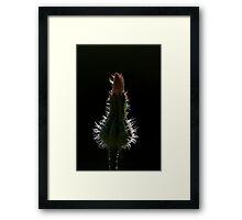 3231 Framed Print