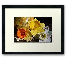 Daffodil Threesome Framed Print