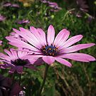 Always Think Pink !!! by rasim1