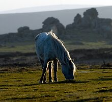 Dartmoor by MWhitham