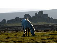 Dartmoor Photographic Print