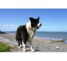 Indy by the sea. Photographic Print