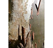 Bark Abstract Photographic Print