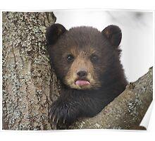 Bear Cub Poster