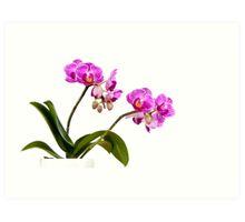 Tropical Blooms Art Print
