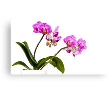 Tropical Blooms Metal Print