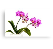 Tropical Blooms Canvas Print