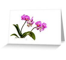 Tropical Blooms Greeting Card