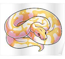 Albino Ball Python V2 Poster