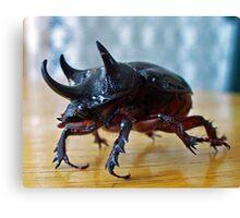 Strategus antaeus - Ox Beetle Canvas Print