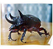 Strategus antaeus - Ox Beetle Poster