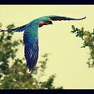 parrot by brett watson