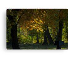Sun through the trees - Mill Creek Park Canvas Print
