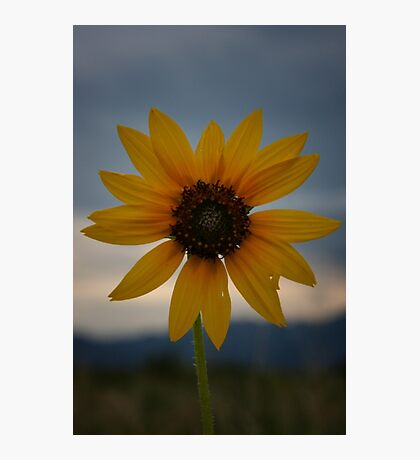 Storm Cloud Wildflower Photographic Print
