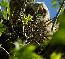 Mom and Fledgling Great Horned Owls by Klaus Girk
