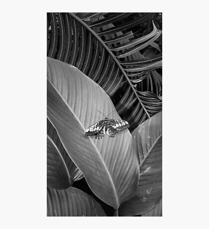 Monotone Butterfly Photographic Print