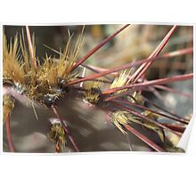 Cactus Spines Poster